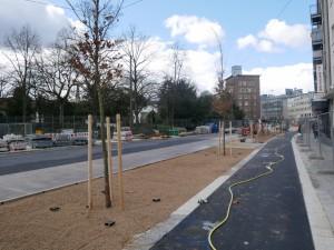 Bäume Friedrich-Verleger-Straße (2)
